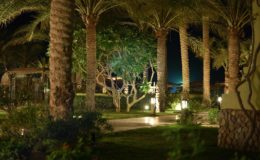nightview-palm-garden
