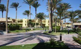 Aegypten Hurghada Palmen Garten