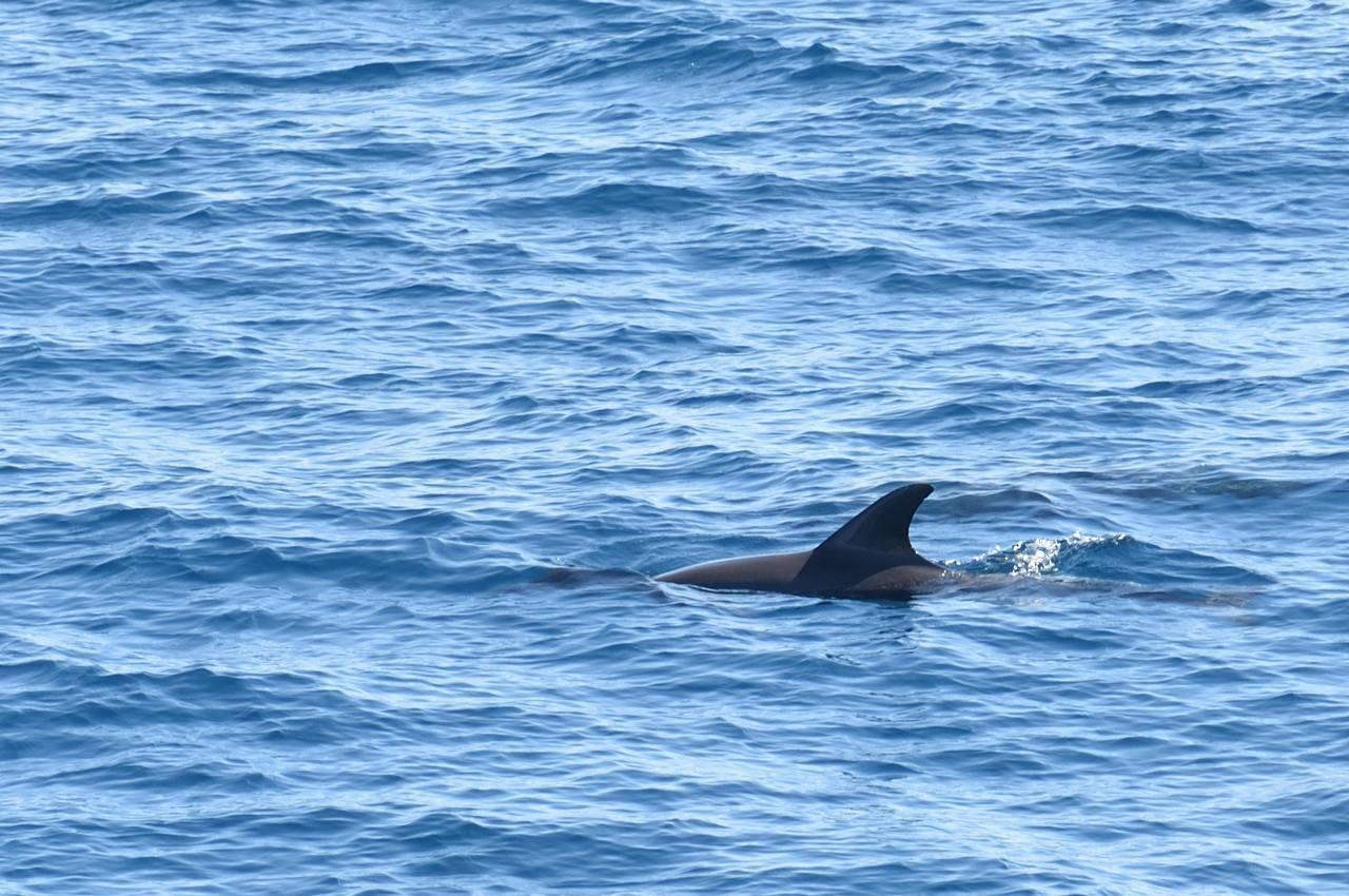 Delphin vor Hurghada